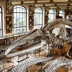 Comment contacter un musée à Marseille, 13000 ?